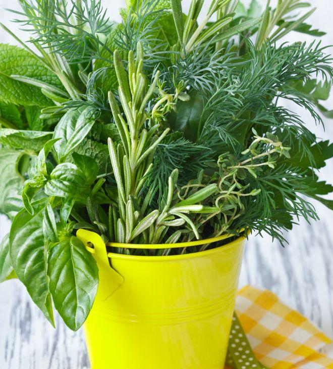 Coltivare le piante aromatiche in casa anche in inverno