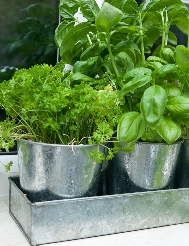 Coltivare le piante aromatiche in casa anche in inverno risparmiare di mammafelice - Erbe aromatiche in casa ...
