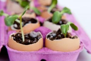 Come riciclare i contenitori delle uova