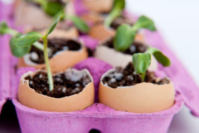 Preferenza Come riciclare i contenitori delle uova | Risparmiare di Mammafelice XZ09