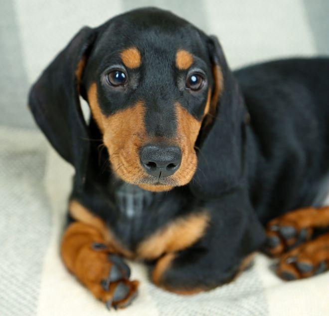 autoproduzione-shampoo-secco-per-cani-animali-domestici-risparmiare