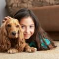 casa-sicura-animali-domestici-cane-gatto