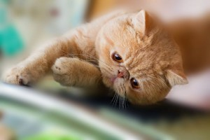 come-lavare-il-gatto-risparmiare