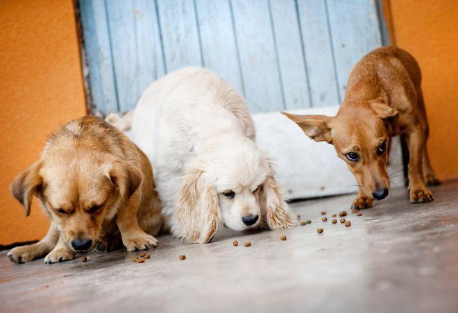 cibo-per-cani-faidate-autoproduzione