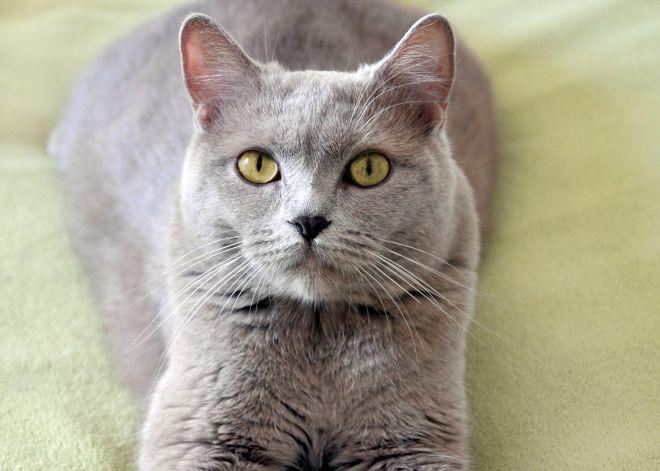 cibo-per-gatti-fatto-in-casa-risparmiare