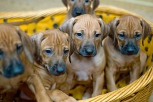 Animali domestici: casa organizzata