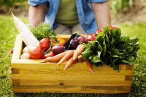 Tutor dell'orto: come diventare un professionista dell'agricoltura