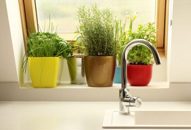 Coltivare erbe aromatiche in cucina